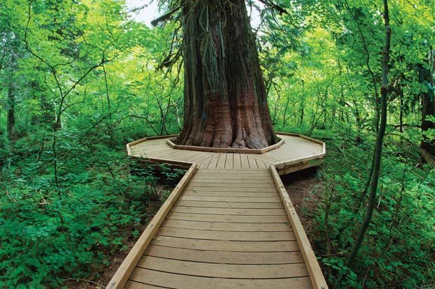 Best Hikes Into Old Growth Forest